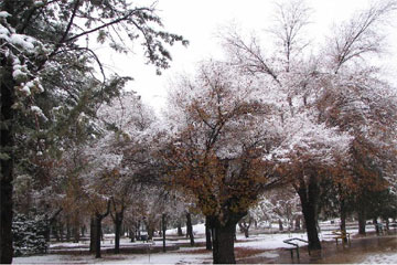 snow_azadi_park_shiraz
