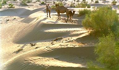 Day 14 - Kyzyl Kum Desert